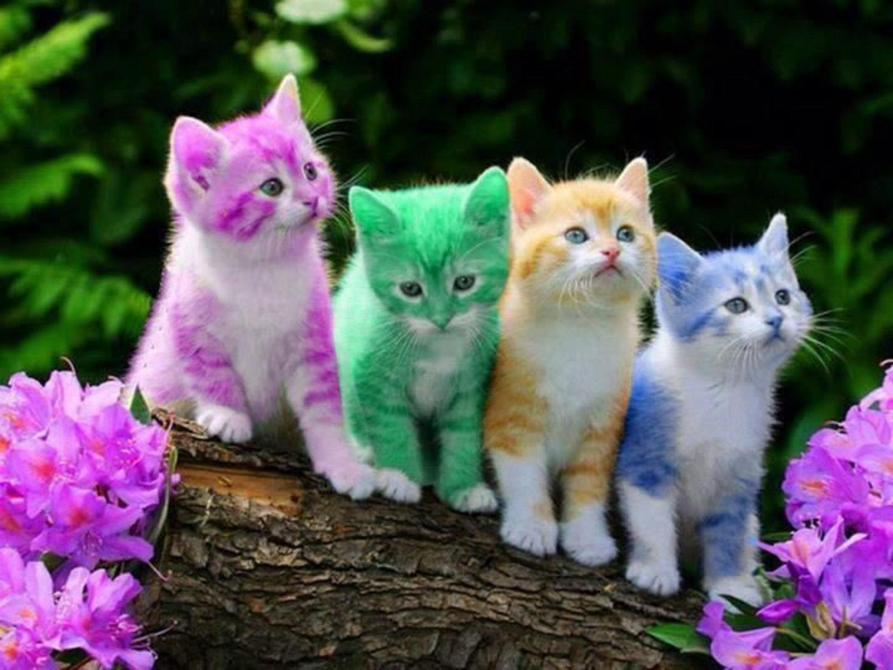 Awesome Multi Colourful Funny And Cute Cats laughspark