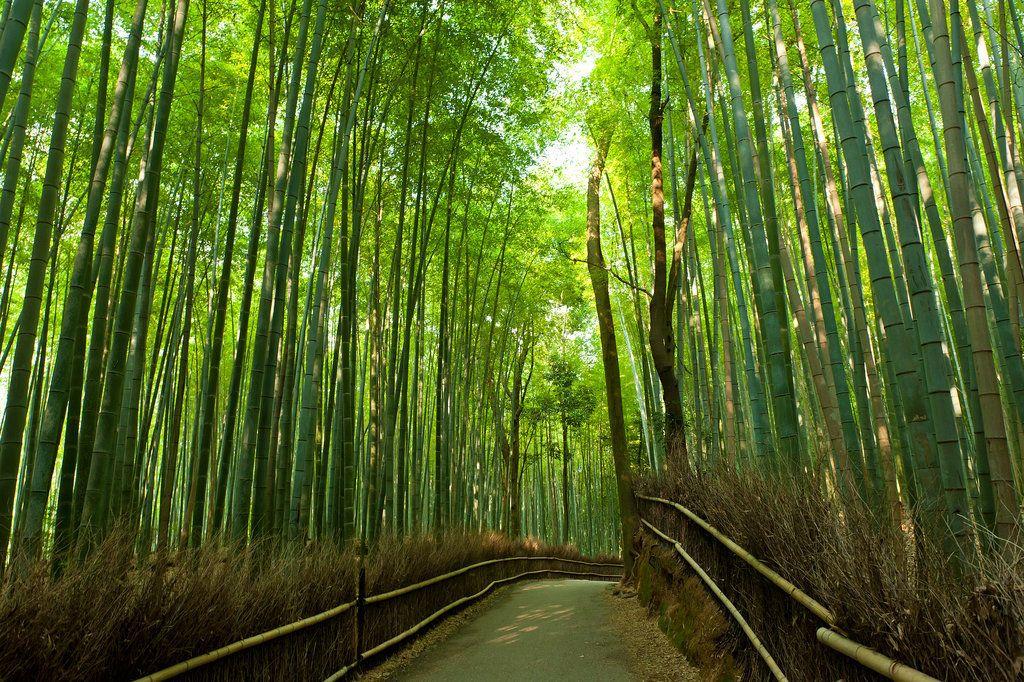 Arashiyama Bamboo Grove, Japan
