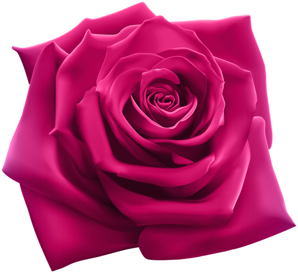 Pink Rose Png Clipart Image Purple Roses Pink Rose Png Flower Background Iphone