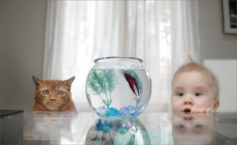 Two ways of looking at a Fish.
