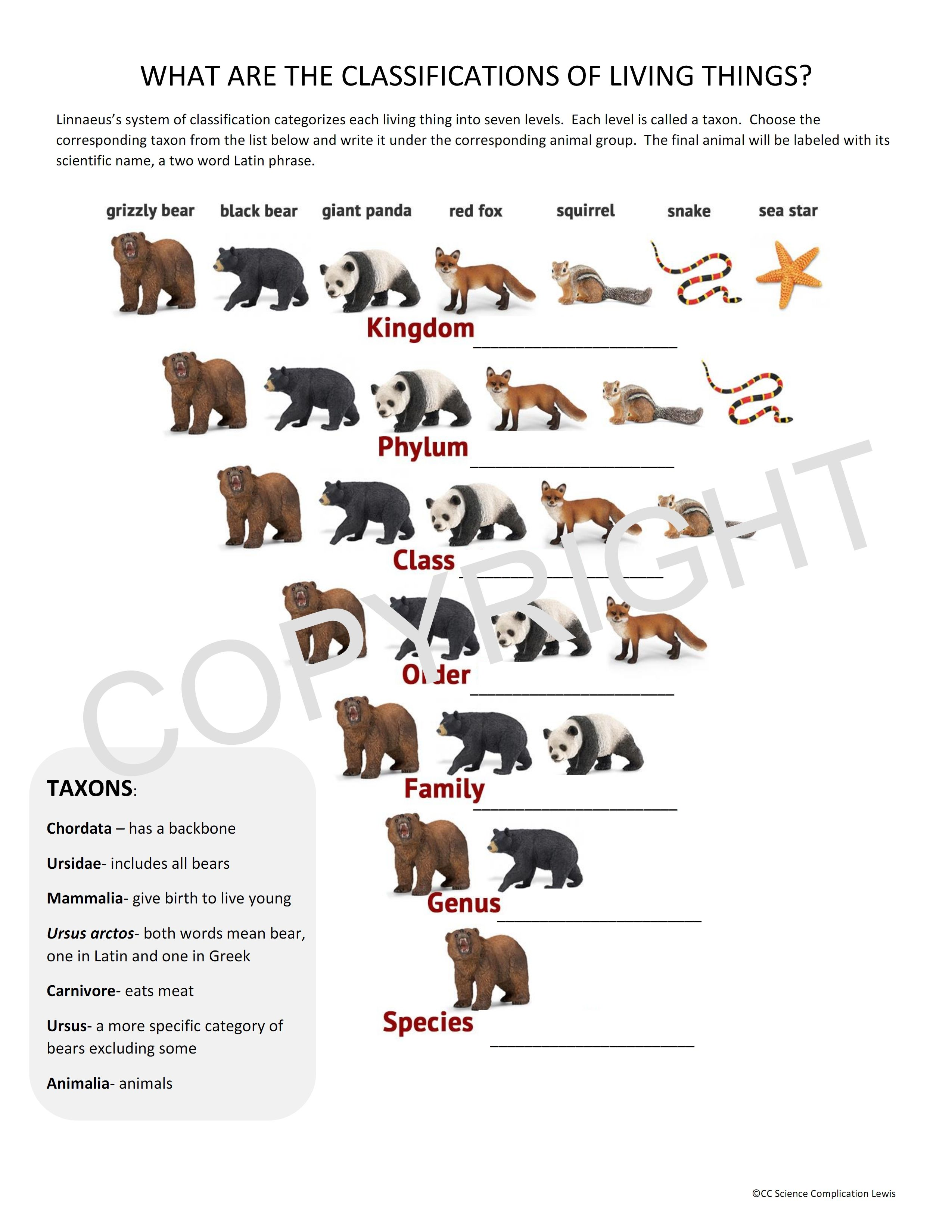 Worksheet For The Classification Of Living Things Classical Conversations Scien Classical Conversations Science Worksheets Classical Conversations Foundations