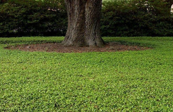 plante couvre sol un tableau de couleurs naturelles dans votre jardin jardin