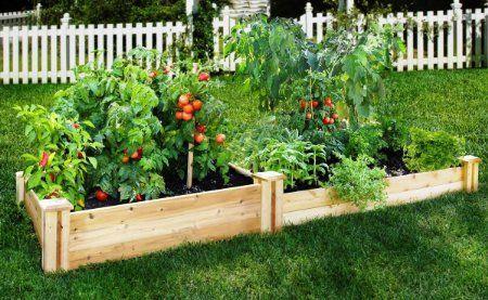 "Amazon.com: Greenes Cedar Raised Garden Kit 4' x 8' x (10.5""-7""): Patio, Lawn & Garden"