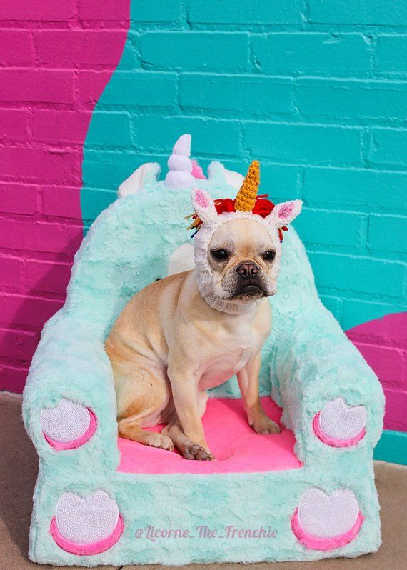 Magical French Bulldog Photo Puppy Mill Survivor Licorne The