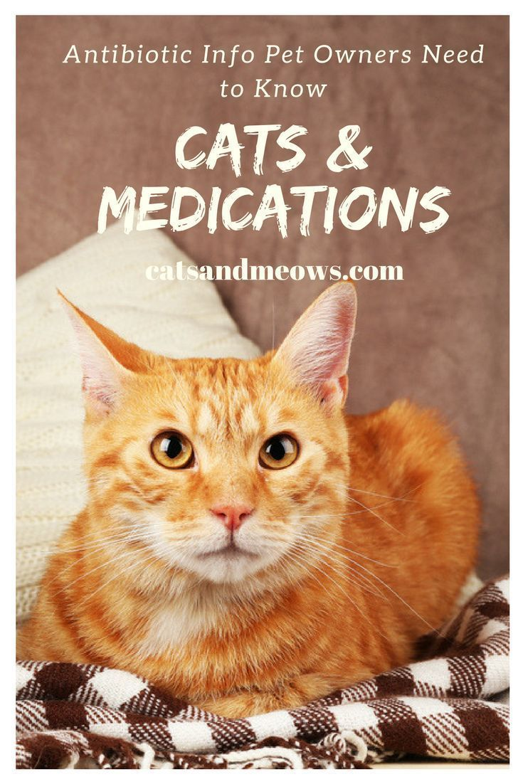 Cats and Medications Antibiotic Info Pet Owners Need to