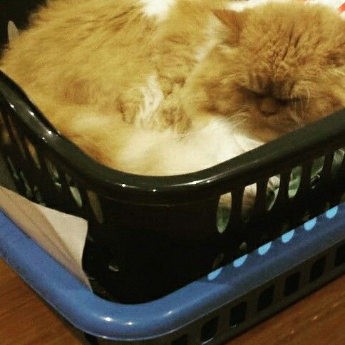 Dormir no meio roupa lavada! grr