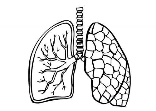 Coloring Page Lungs Img 9488 Coloring Pages Heart Coloring Pages Lunges