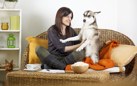 """""""4 Surprising Tips for Doggy Apartment Living"""" 