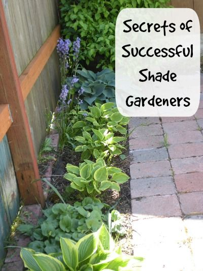 Learn the secrets of successful shade gardening. I love how even this small space can become a garden. Photo by Nostepinne