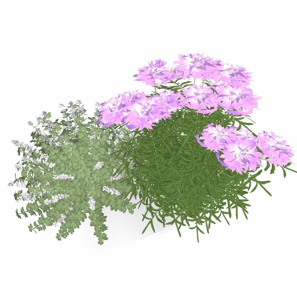 Butterfly Blue Pincushion Flower And Montrose White Calamint
