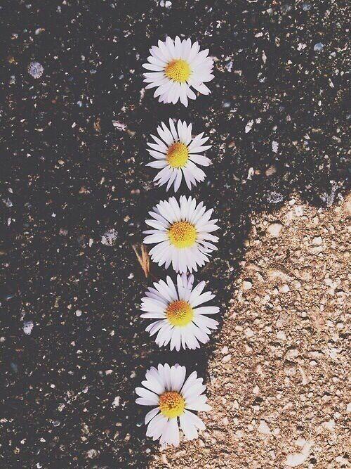 Iphone 5 Flower Wallpaper Tumblr Flowers QnxURd 500x667