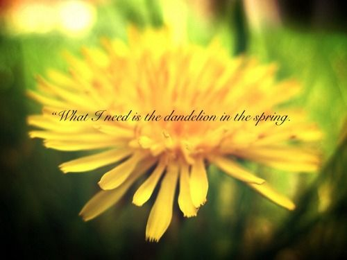 mockingjay-quotes-dandelion-in-the-spring.jpg (500×375)