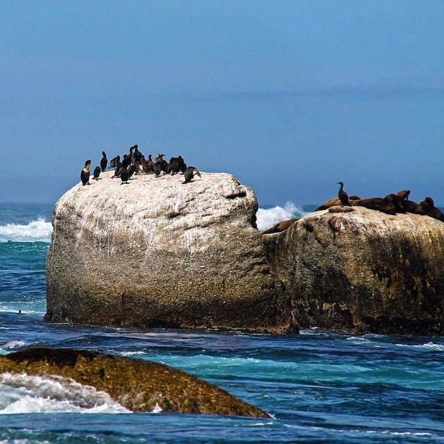 A beleza da natureza em Cape Town ::: ZAF