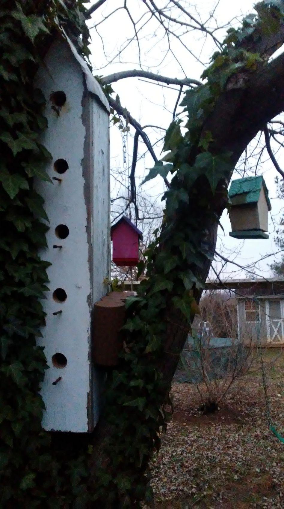 avian gentrification virginia beautiful and tyxgb76aj