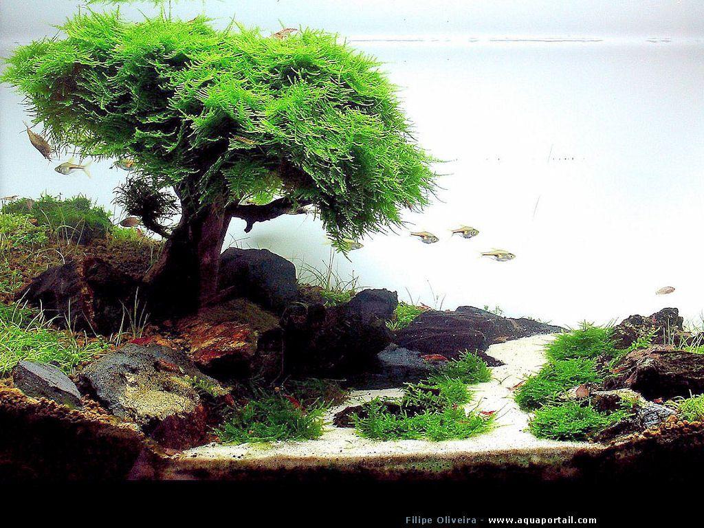 aquascape | aquarium d'aquascape japonais | tank ...