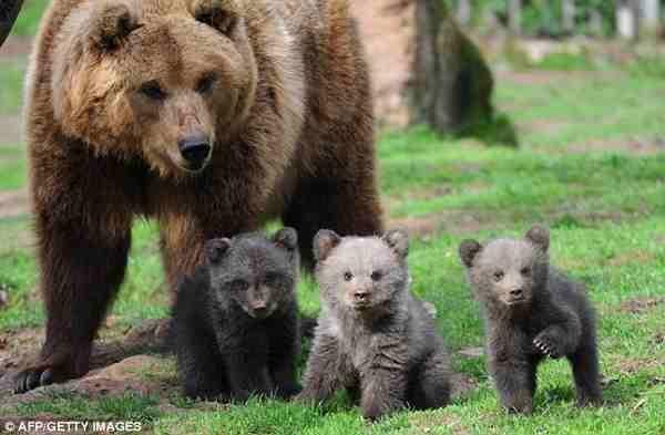 The three bear.......cubs