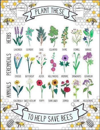 Zone 5 Perennials That Attract Honeybees And Butterflies Bee Friendly Plants Bee Friendly Garden Plants