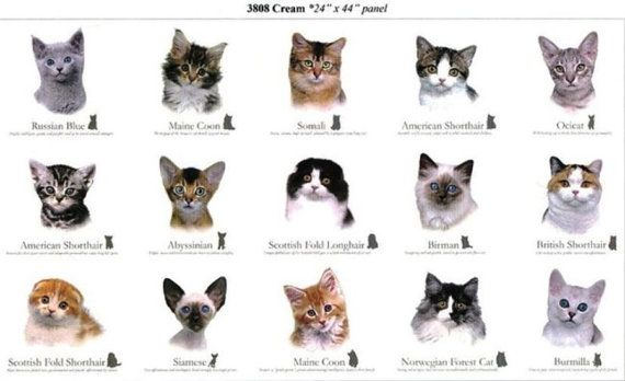 Cat Breed Cotton Fabric Panels By Elizabeth 39 S Studio 15 Different Cats With Breed Names Sold By The Panel Cat Breeds Cat Breeds Chart Cat Breeds List