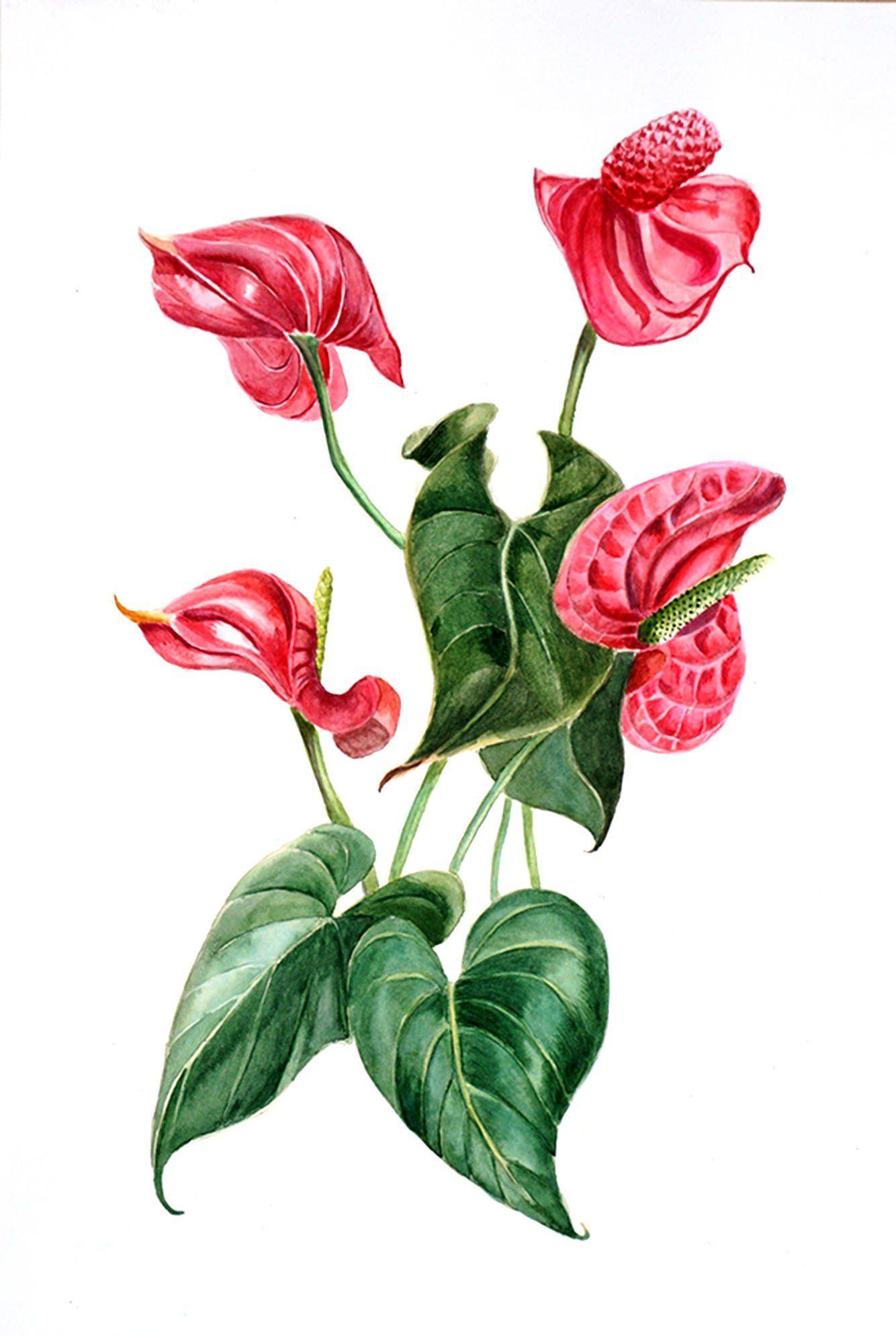 Red Flower Painting Original Watercolor Anthurium Floral Etsy Flower Painting Original Flower Painting Botanical Wall Art