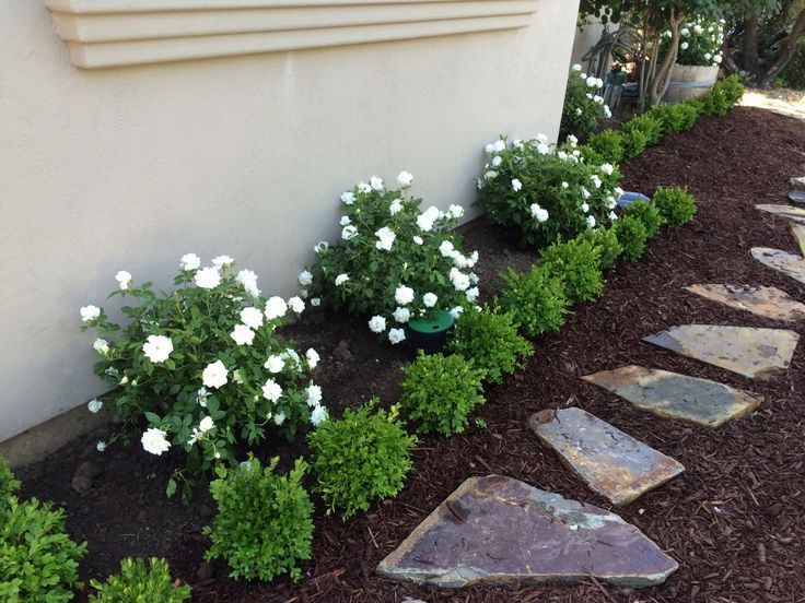 Boxwood Front House Google Search Landscaping Around 400 x 300
