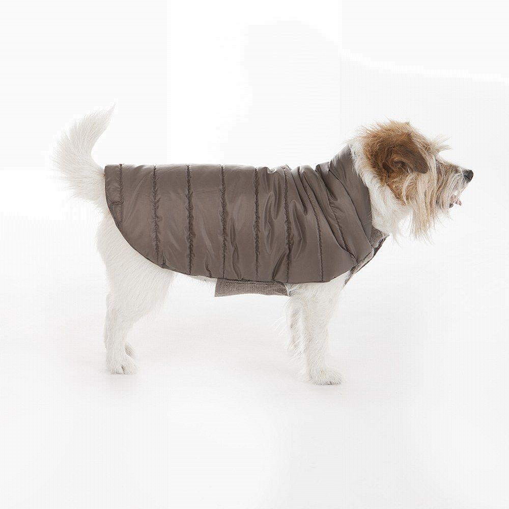 Beetle Dog Coat Mole 10 Mungo Maud Dog And Cat Outfitters Dog Coats Dog Clothes Dog Cat [ 1000 x 1000 Pixel ]