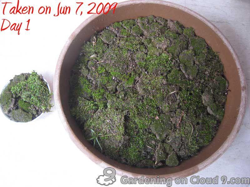 Garden Journal Of Moss Garden   Growing Moss Garden