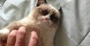 Disgusted cat. Greatest cat evar.