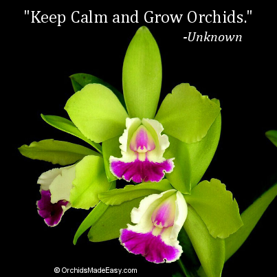 Orchid Quote Keep Calm And Grow Orchids Orchidsmadeeasy Com Green Orchid Orchids Beautiful Orchids