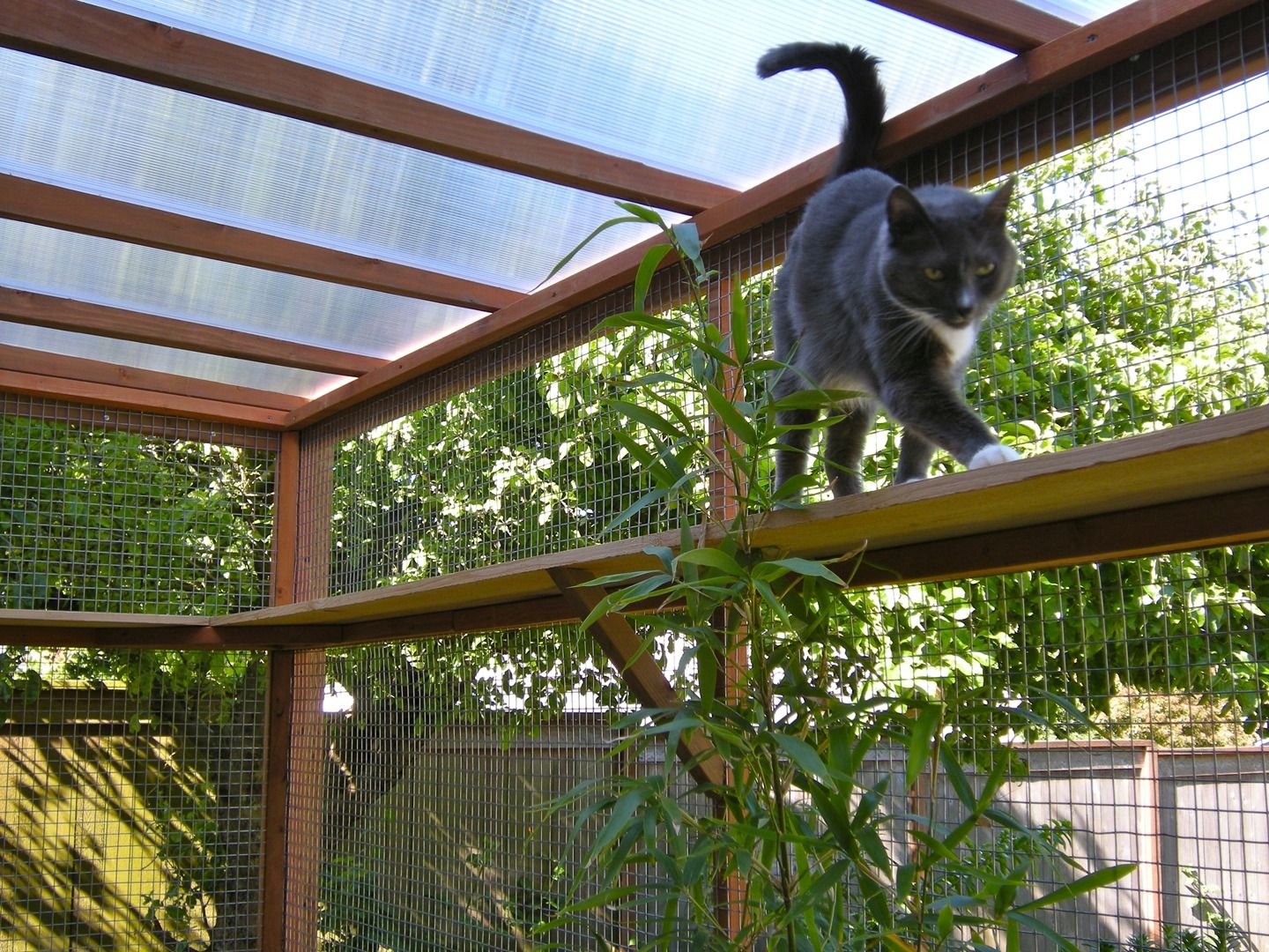 Catio spaces diy catio plans and cat enclosures for Exterior enclosure