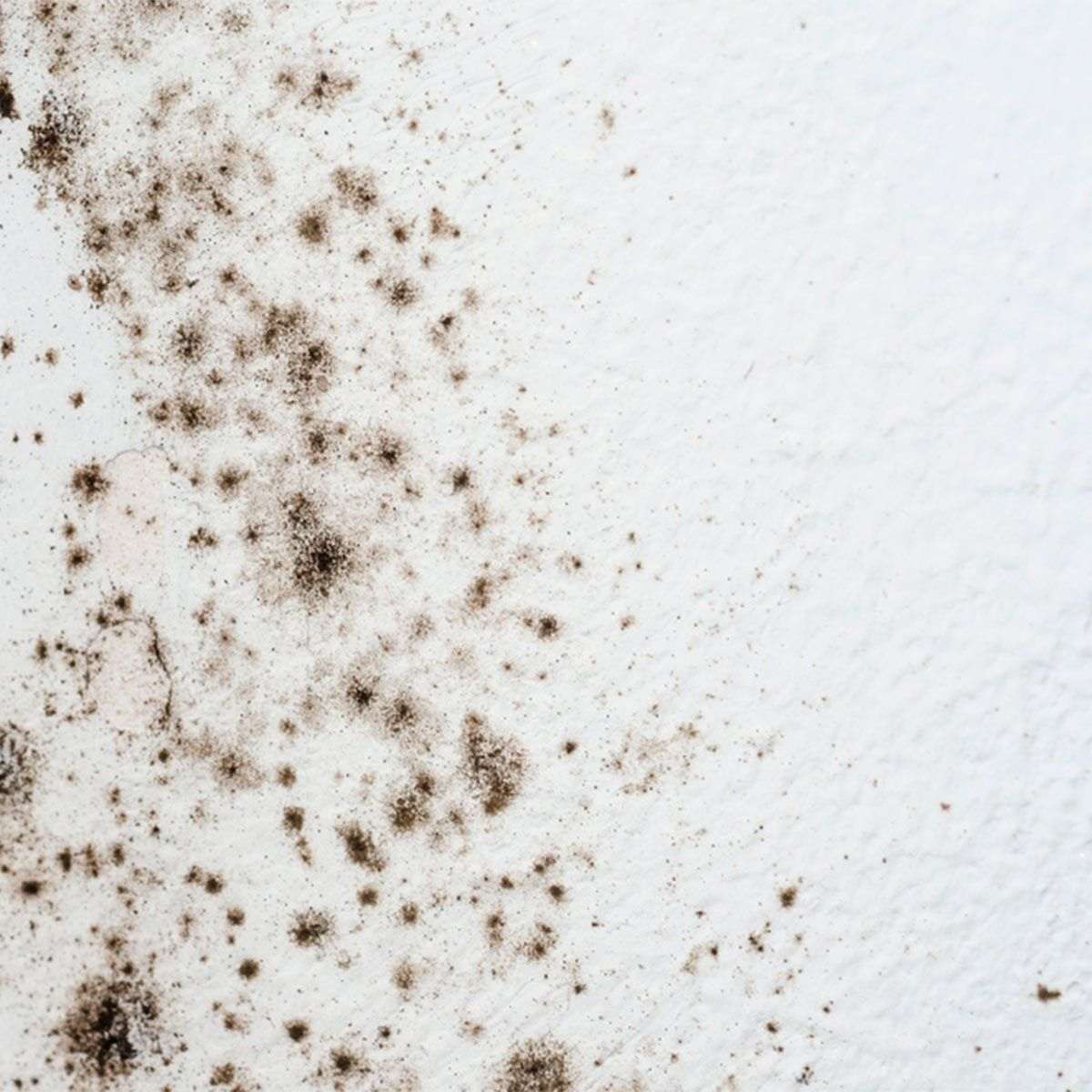 How To Get Rid Of Mold On Walls In The Bathroom Bathroom Mold