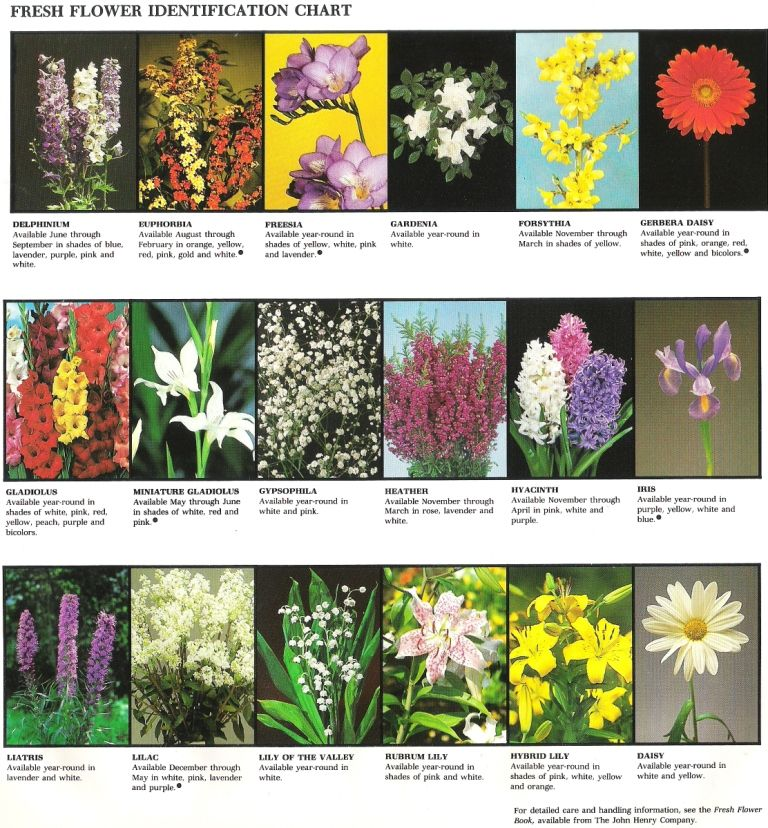 Fresh Flower Identification Chart - 2