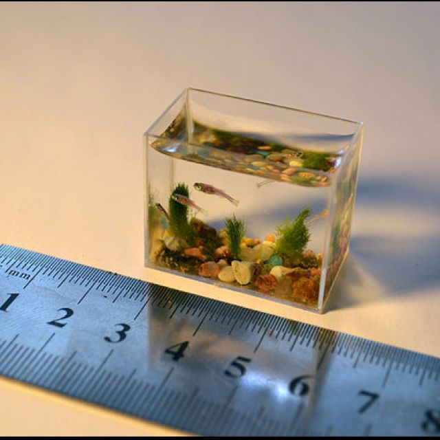 Worlds smallest fish tank pets pinterest small fish for Smallest aquarium fish