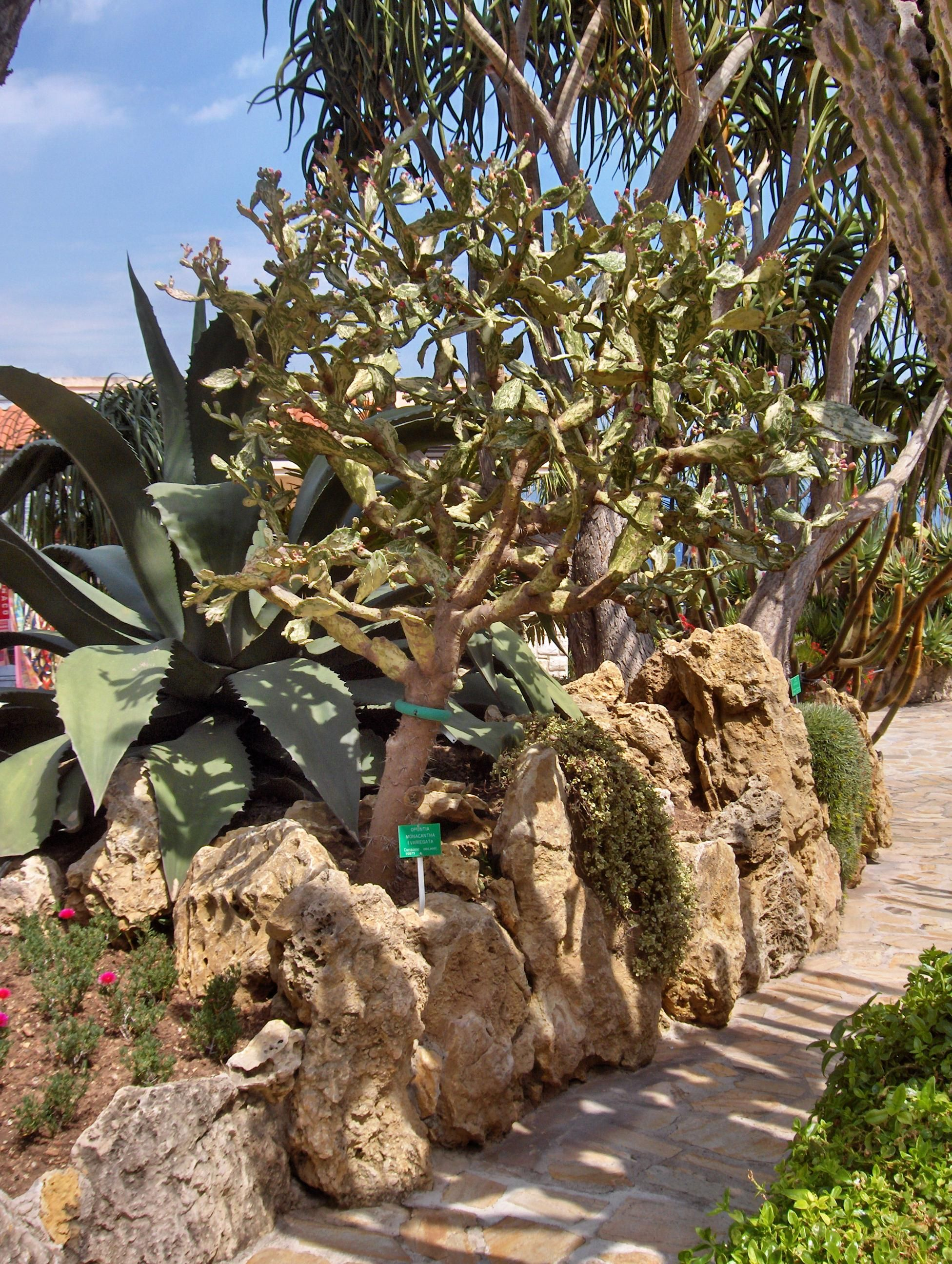 Jardin Exotique De Monaco Gardens Cactus Succulents Garden