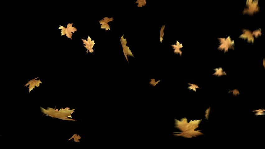 Ad: Autumn Leaves Falling With Alpha Channel Loop Clip. Can use this clip for background or overlays on your image, video project. | Shutterstock Footage | Keywords: alpha, autumn, autumn leaves, background, dry leaves, elementsleaves, fall, falling leaf, falling leaves, fallingleaves, fallleaves, foliage, foreground, gold, green, holiday, leaf, leaves alpha, leaves falling, loop, maple, maple leaf, maple leaf falling, maple leaves, maple leaves falling, nature, opener, orange, overlays, particl #autumnleavesfalling