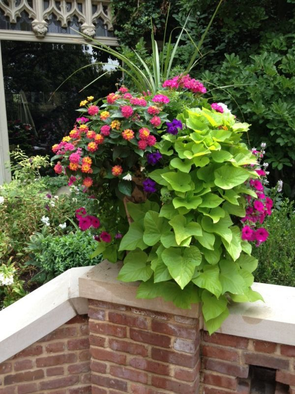 Stunning Container Gardening Ideas Lantana (?) sweet potato vine, geranium, dracenaLantana (?) sweet potato vine, geranium, dracena