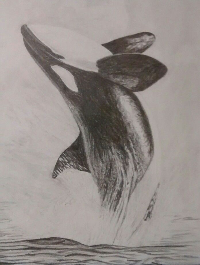 how to draw killer whales for kids