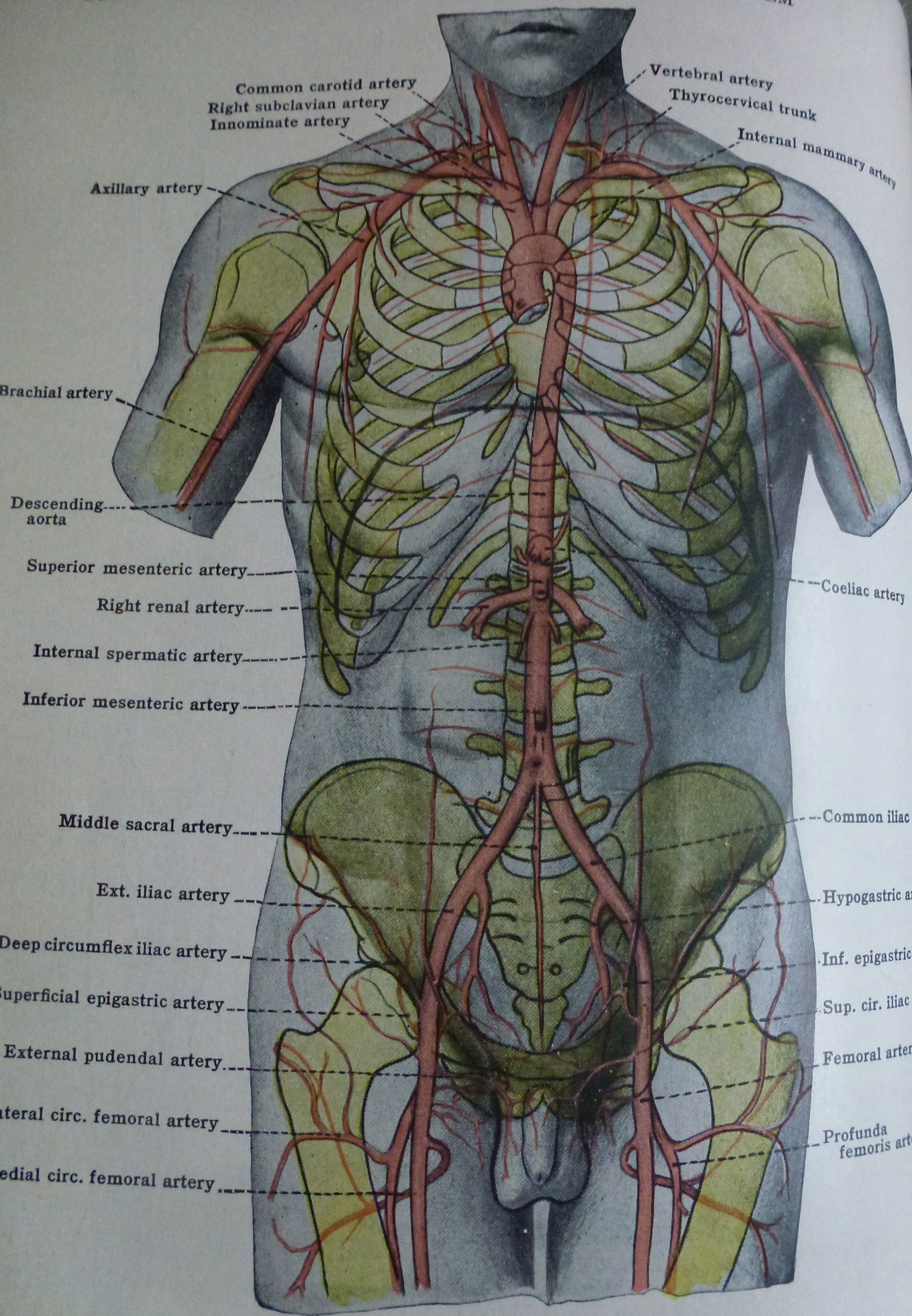 mEDICAL bOOK eMBRYOLOGY #arteries #medicaldiagram #humanbody ...