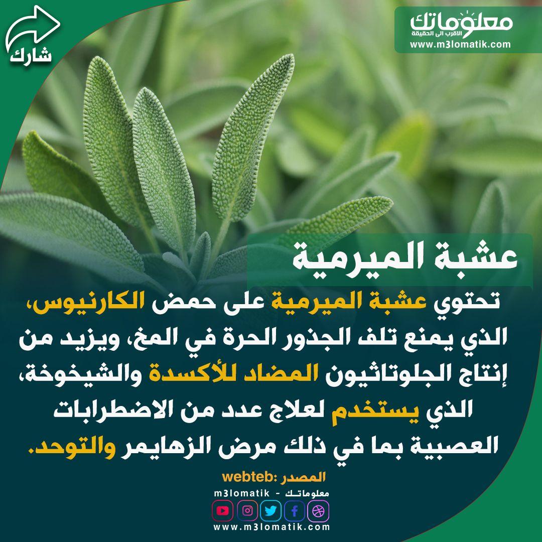 عشبة الميرمية In 2021 Plants