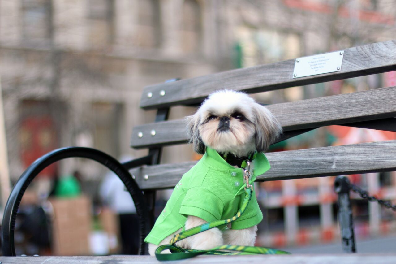 Follow Marshall The Dog Around The Big Apple To Find Out The Latest Fashion Trends Wearing Canine Styles Green Golf Dog Polo Sh Canine Dogs Lifestyle Brands