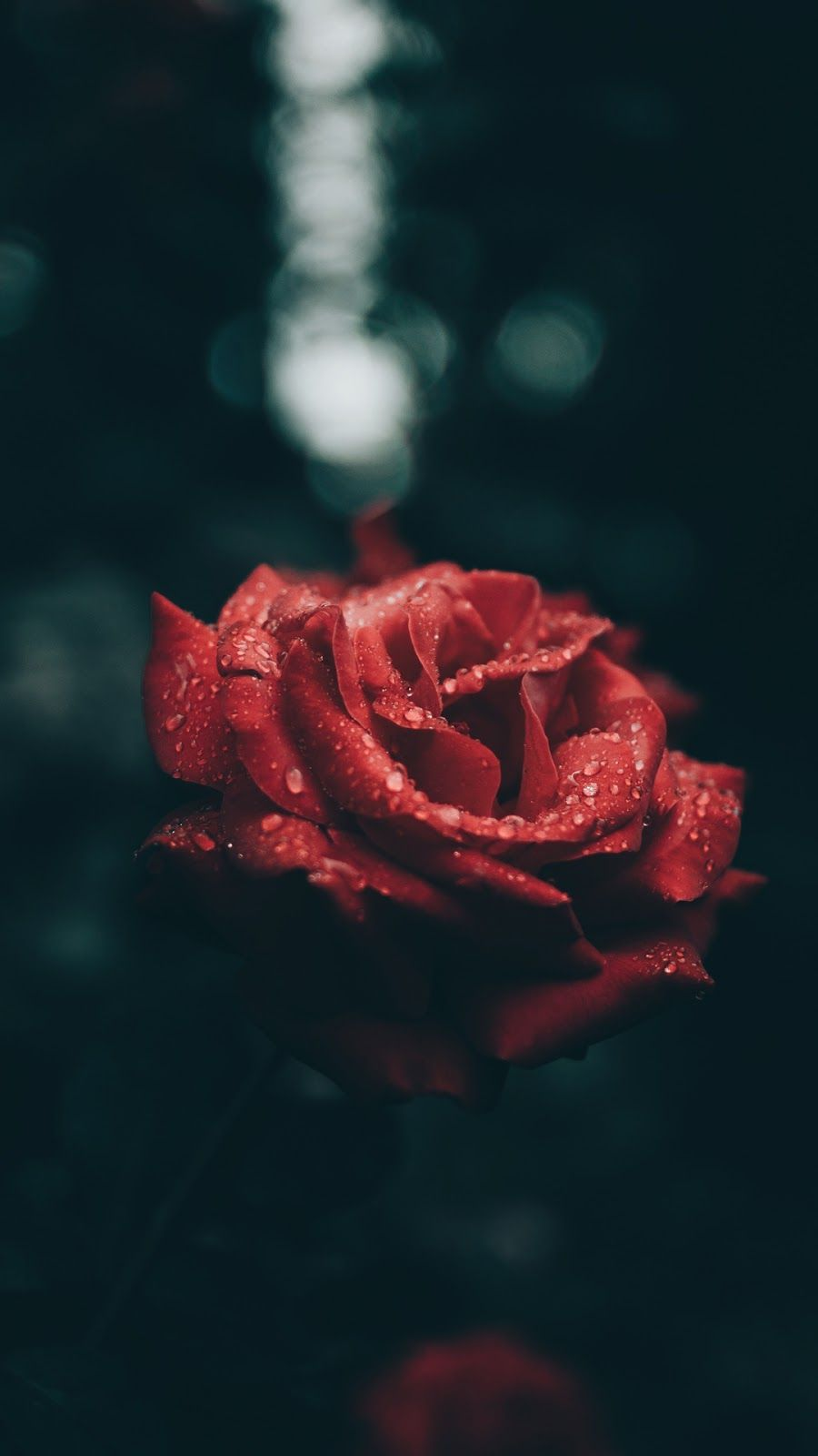 Rose And Raindrops With Images Preppy Wallpaper Wallpaper