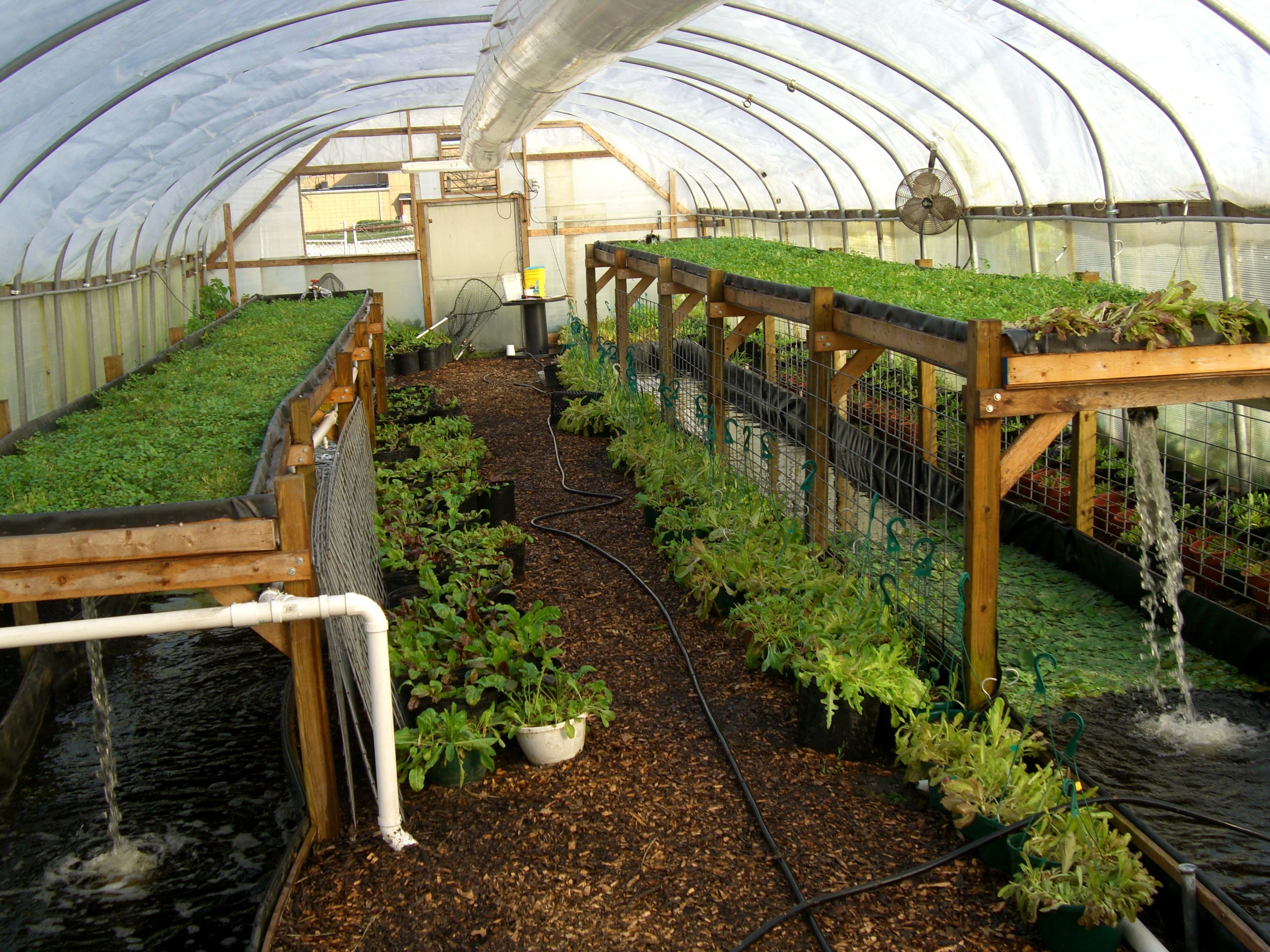 Aquaponics system by Will Allen of Growing Power