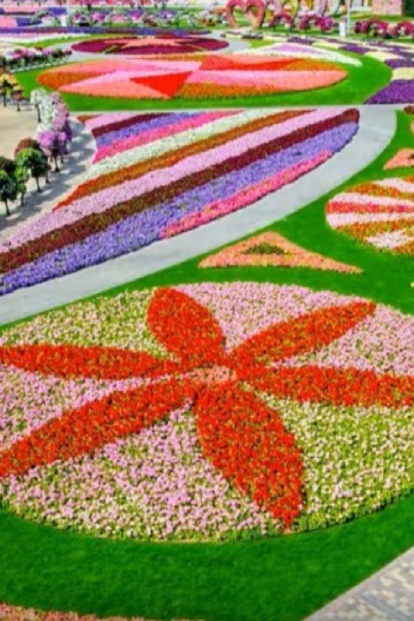 Dubai Miracle Garden (VIDEO) in 2020 Miracle garden