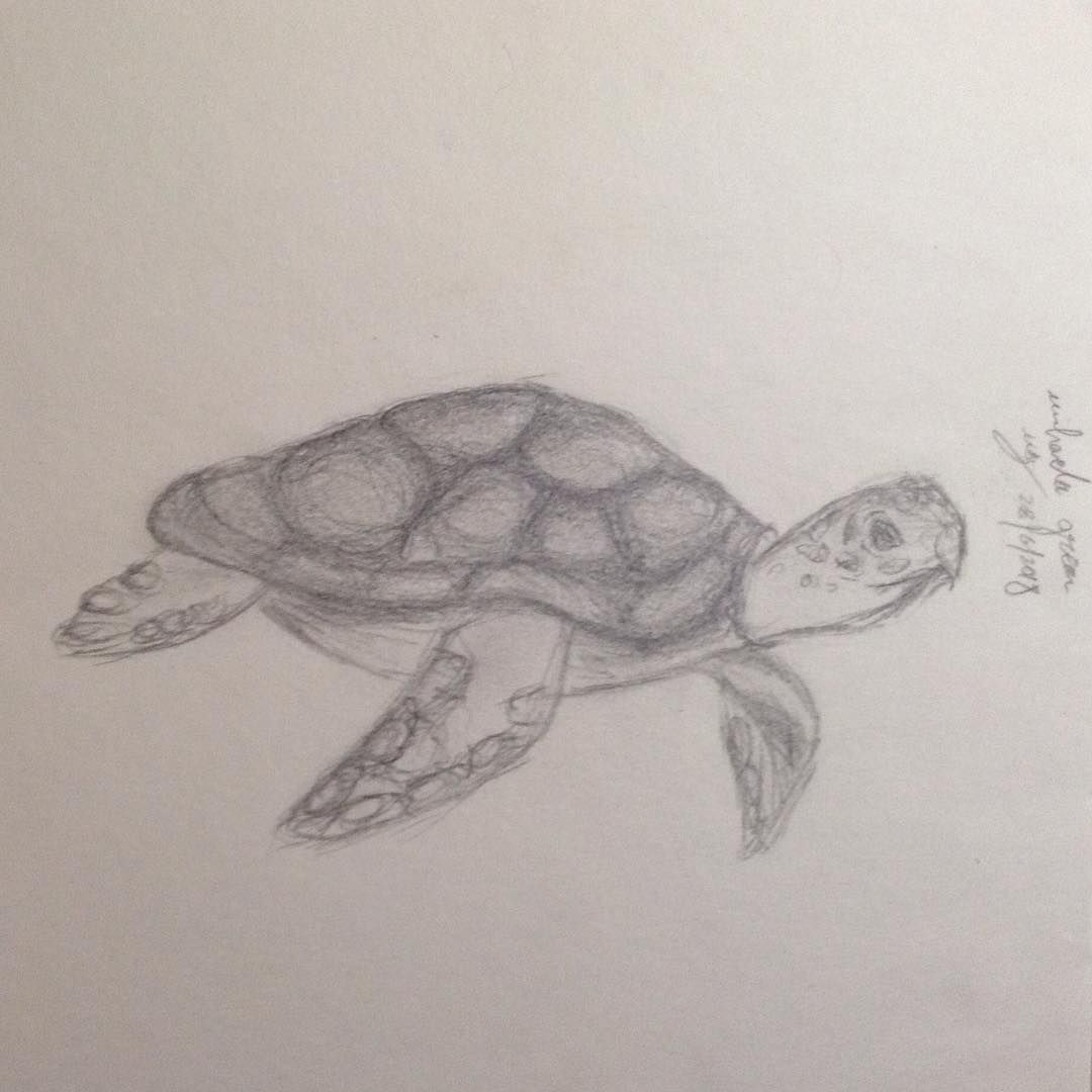 Sea turtle seaturtle turtle drawing art ocean pencil sketch