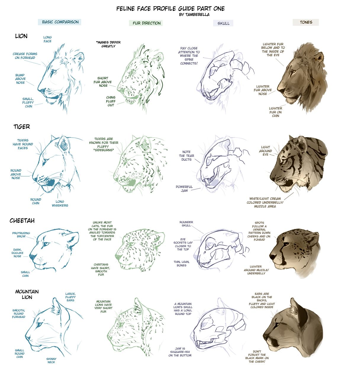 Feline Face Profile Tutorial 1 by *TamberElla on deviantART | Animal ...