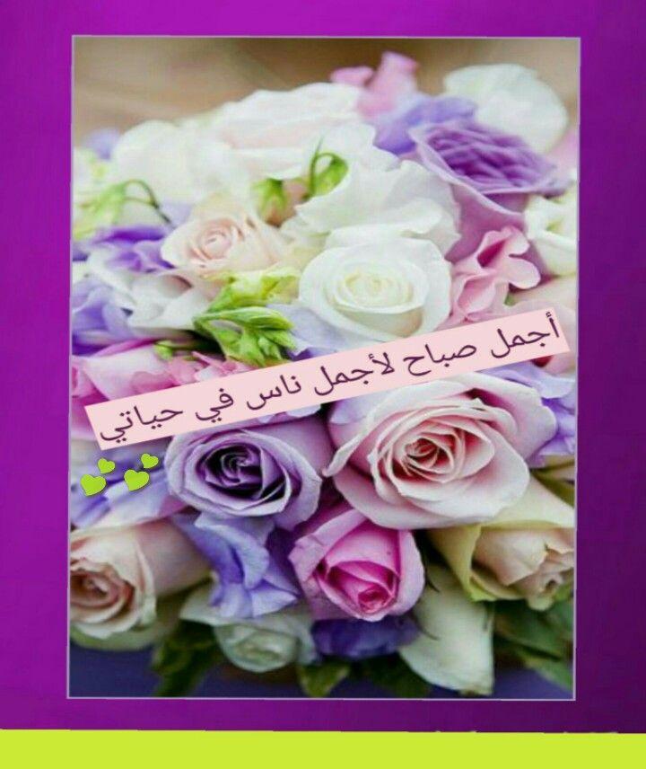 اجمل صباح ﻷجمل ناس في حياتي Flowers Rose Plants