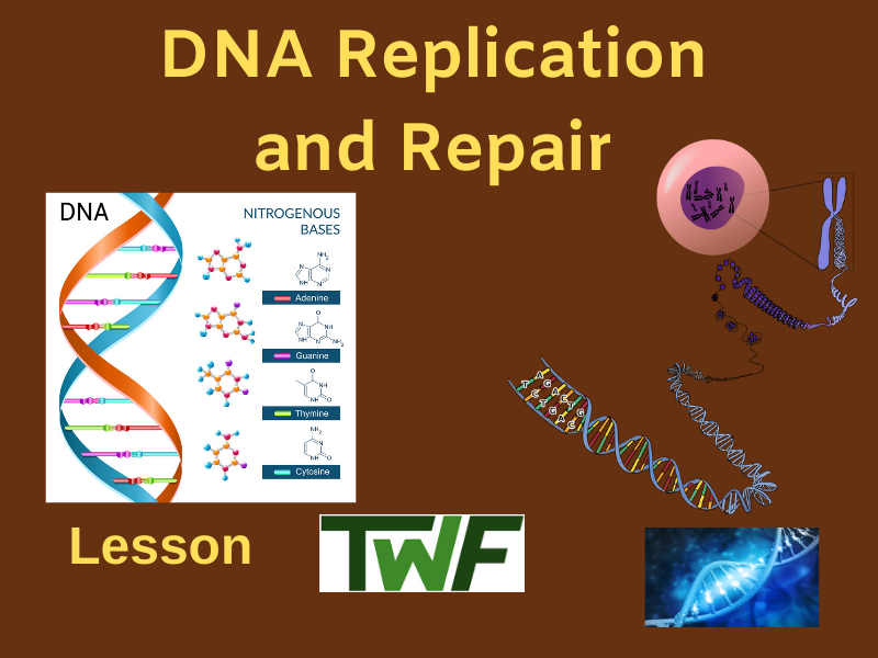 DNA Replication and Repair Lesson Dna activities, Lesson