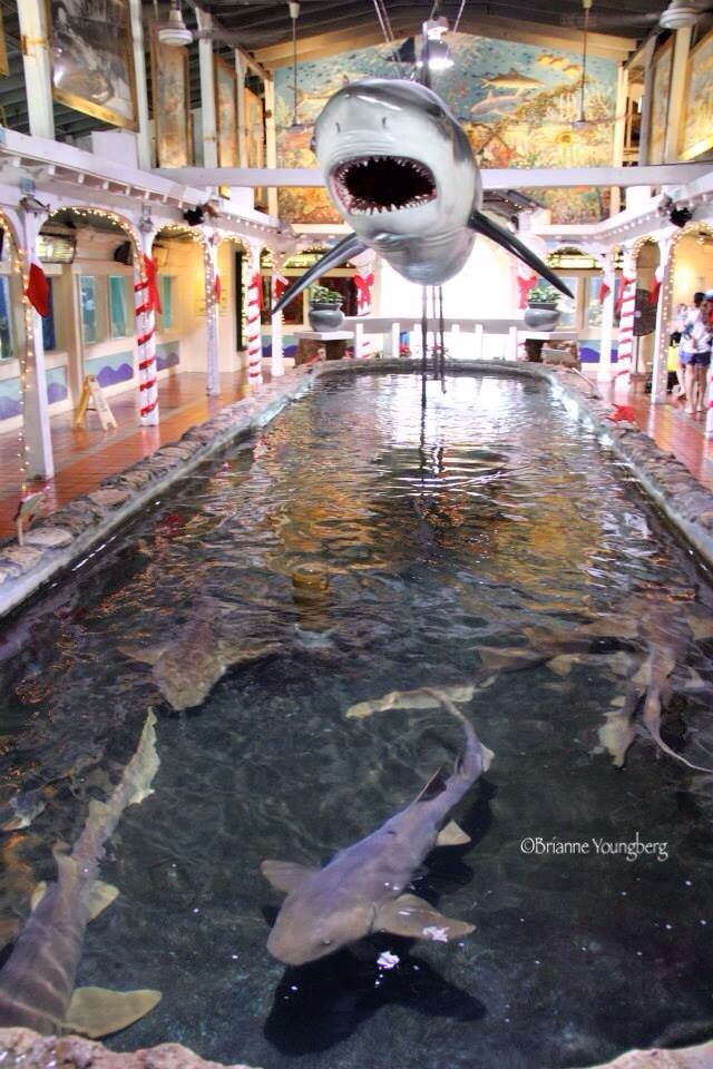 Pin By Christine Gies Lowater On Amazing Places I Ve Been Things I Ve Done Places To Travel Key West Aquarium Travel Usa