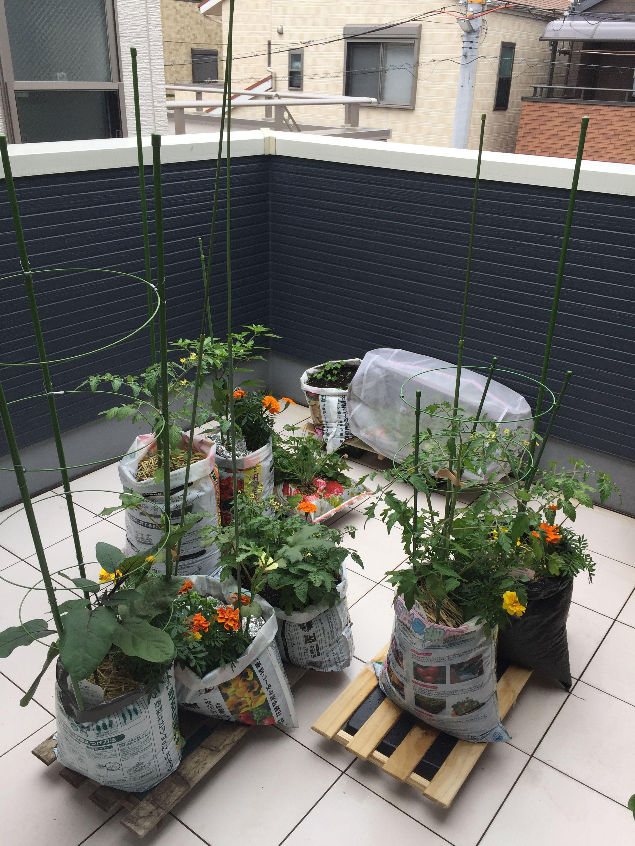 4 5畳のベランダで家庭菜園 袋栽培してます 植物栽培 ベランダ