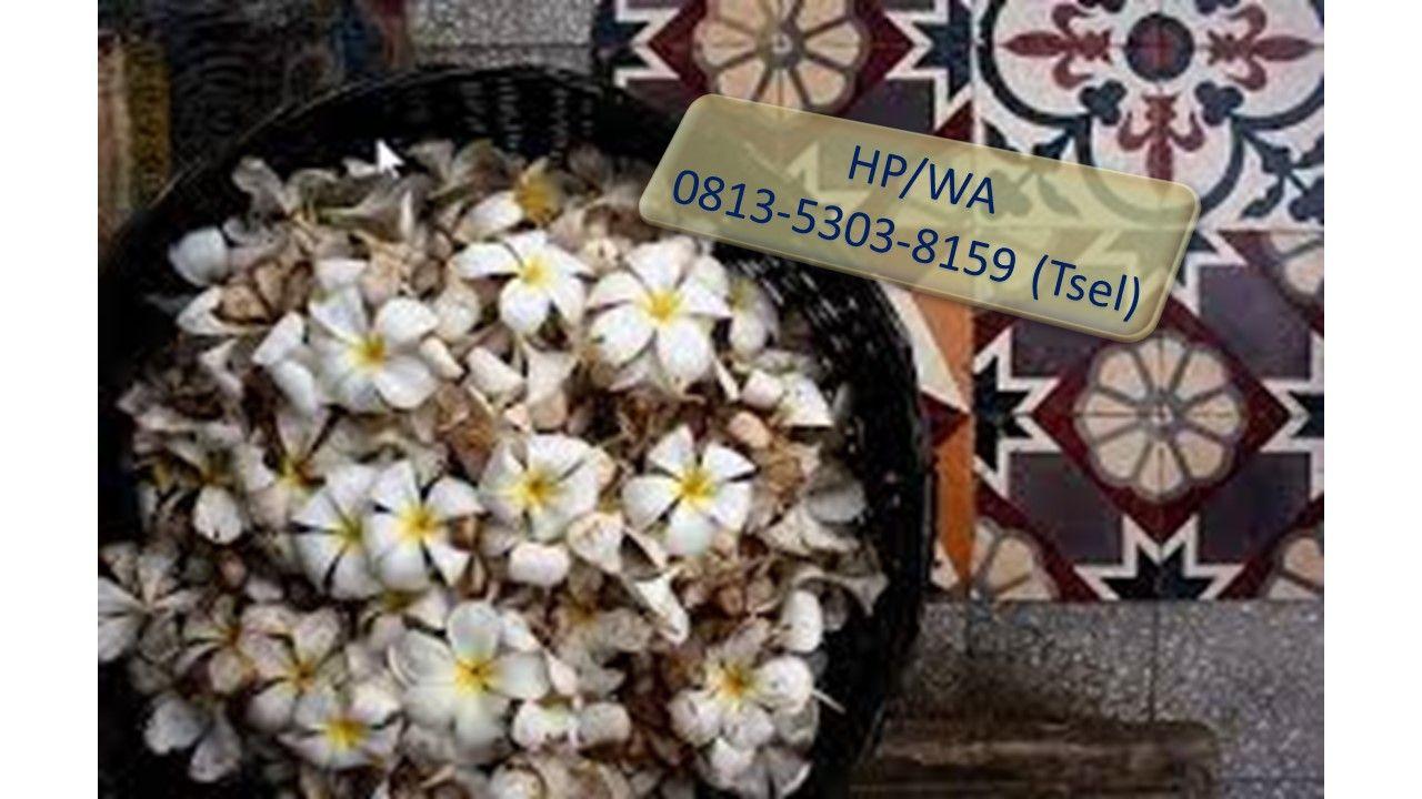 Hp Wa 0813 5303 8159 Tsel Produsen Bunga Adenium Obesum Di Surabaya Surabaya Bunga Jepang