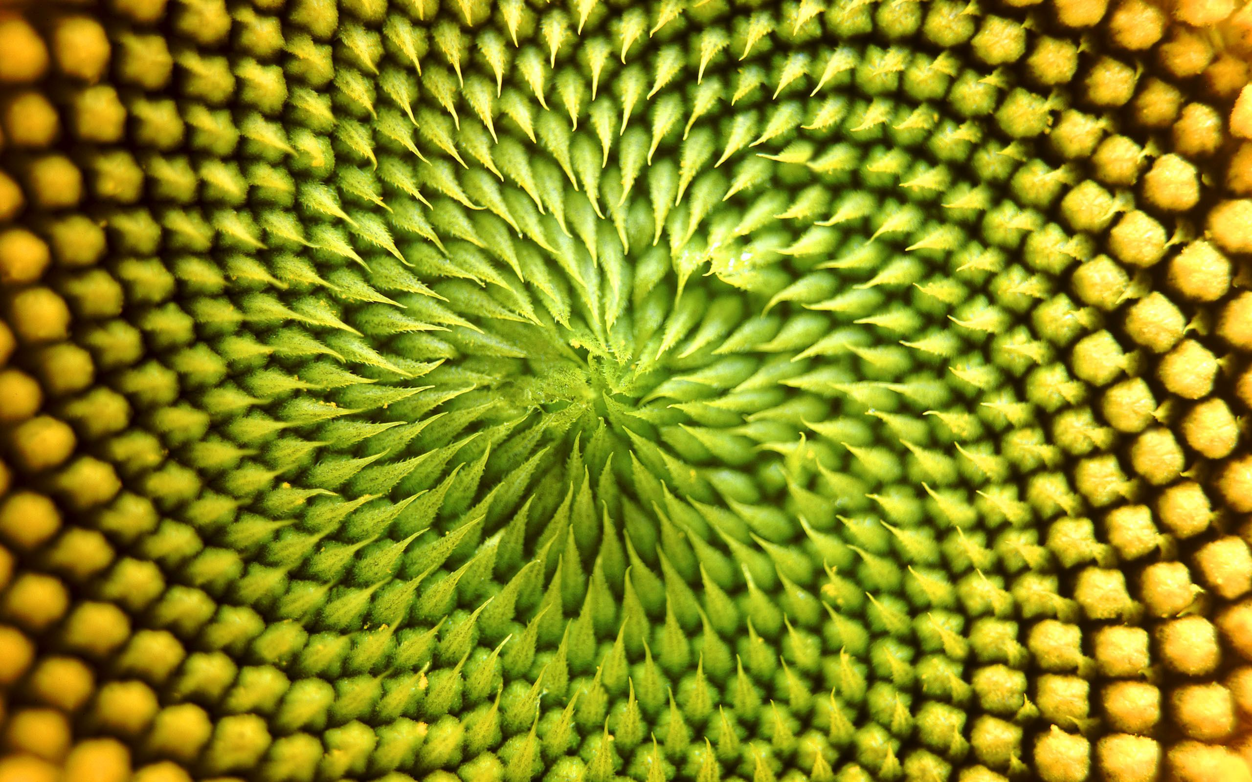 Fractal Nature Google Search Patterns In Nature Sunflower